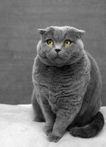 Find det bedste kattefoder billigt online