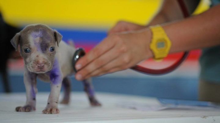 Giv dit dyr de bedste vilkår med en dygtig dyrlæge