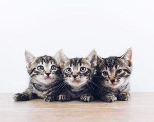 Lær om katte, inden du køber én