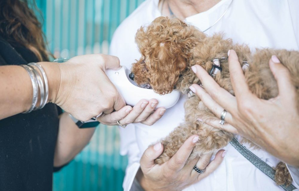 Få hjælp til familiens dyr hos din lokale dyrlæge